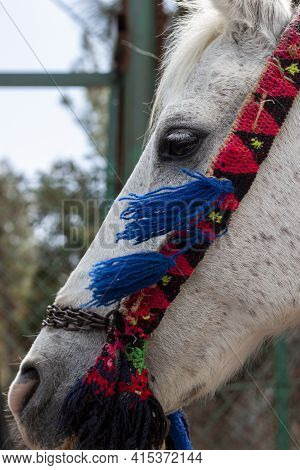 Close Up Isolated Profile Portrait Of A White Carriage Horse With An Artistic Hand Woven Mouth Bit.