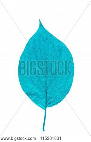 Green Leaf With Texture Isolated On White