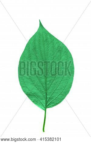 Green Leaf With Texture Isolated On White.