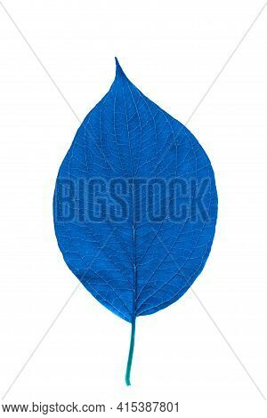 Blue Leaf With Texture Isolated On White.