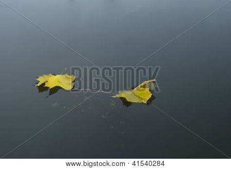 Two Yellow Maple Leaves On Water Surface