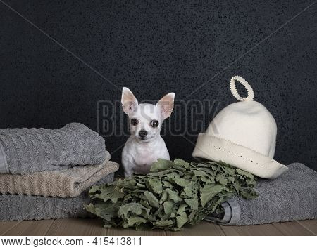 The Chihuahua Sits Between A Pile Of Large Towels, An Oak Bath Broom And A Bath Cap. White Dog Gazes