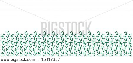 Pattern Of Grassy Green Isolated On White Background. Beauty In Nature. Copy Space. Spring Or Summer
