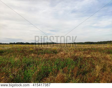 Big Field, Field Of Grass In Early Autumn, The Sky With Clouds
