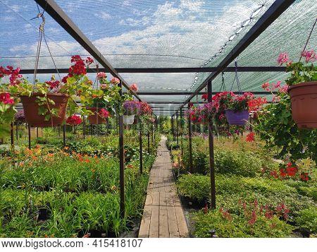 Garden Center. Garden Shop. Sale Of Plants, Trees And Flowers. Variety Of Plants, Trees And Flowers.