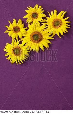 Wallpaper Of Yellow Sunflowers On A Lilac Background.
