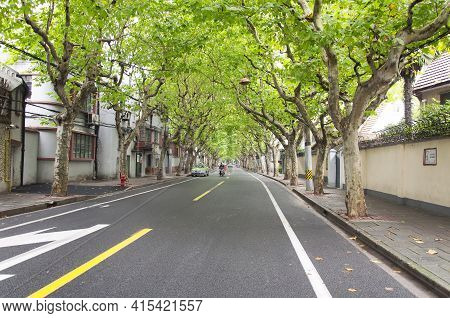 Shanghai, China. October 5, 2015.  Famous Sycamore Trees Lining A Road In The French Concession On T