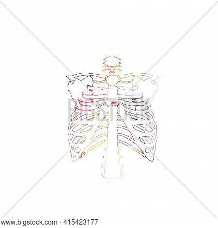 Colorful Rib Skeleton, Rib Cage Bones, Anatomical Poster With Human Skeletal System. Healthcare, Med