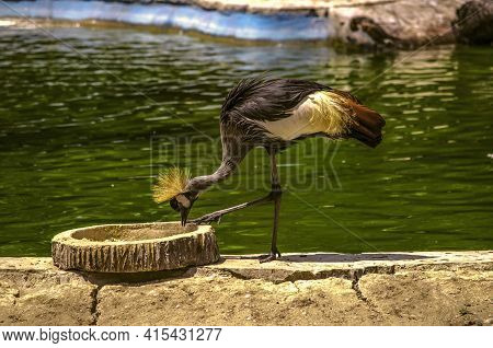 Beautiful Crested Heron On A Hot Summer Afternoon Pecks Food From A Feeder On The Shore Of A Reservo