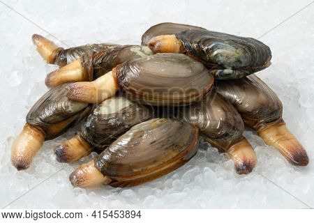 Heap of fresh raw alive soft shell clams, an edible saltwater clam, on ice