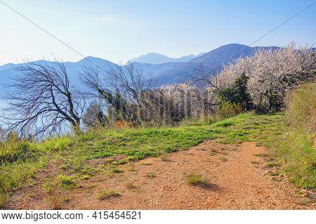 Sunny Spring Day In Mountains. Beautiful Mediterranean Landscape. Montenegro,  Kotor Bay, Tivat