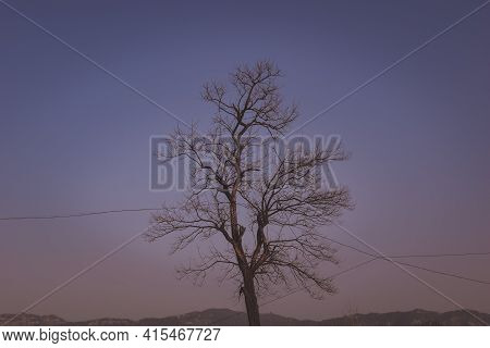 Beautiful Eastern Black Walnut Tree Under Open Sky And Wires Going Through Tree.