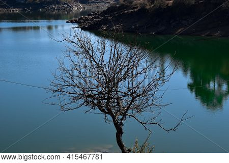 Nature Outdoor Picture Bare Tree And Green Color Lake