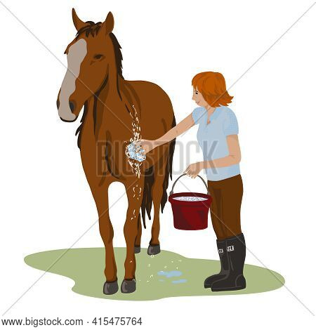 Young Teenage Girl Rider Washing Her Brown Horse. Bright Colorful Summer Time Outdoors. Cartoon Vect