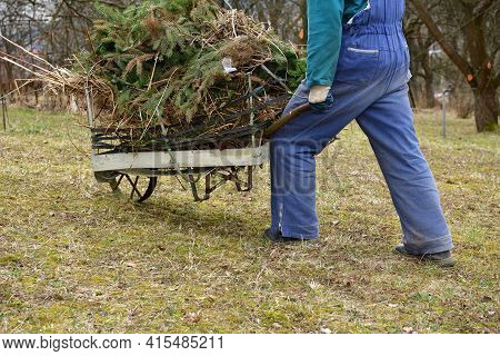 The Man In The Garden Collects Into Barrow Dry Leaves And A Branch In The Spring
