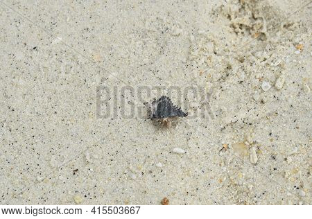 Hermit Crab Crawling On Sand At Beach From Lipe Island  Travel Location In Thailand