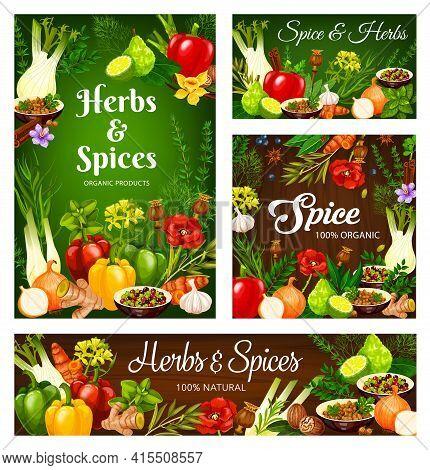 Herbs And , Cooking Seasonings And Condiments, Vector Vegetables Food. Farm Herbs And Seasonings Gar