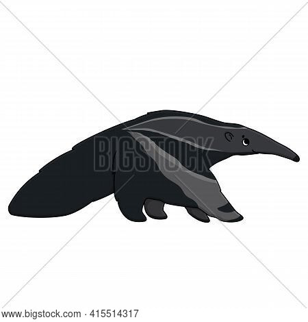 Vector Outline Cute Cartoon Isolated Anteater Gray Animal Is Going To Somewhere And Looks Up. Hand D