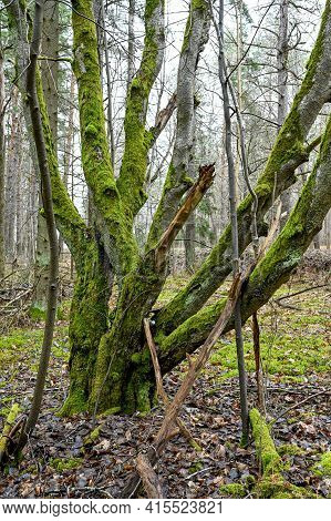 Green Moss Growing On Tree Trunk In Forest