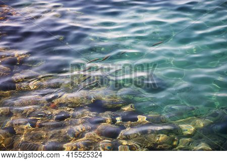 Small School Of Fish In Crystal Turquoise Water Of The Red Sea. Top Down View Of The Vivid Fish Unde