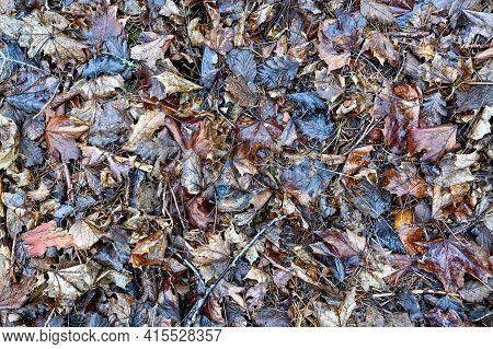 Brown Heap Of Leaves Lying In Forest