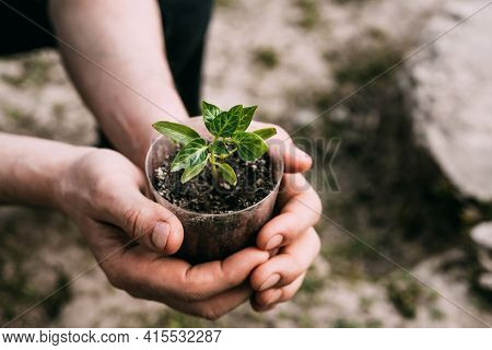 Close-up Of A Mans Hand Holding A Seedling While Sitting On The Ground. Horticulture, Gardening, Hou