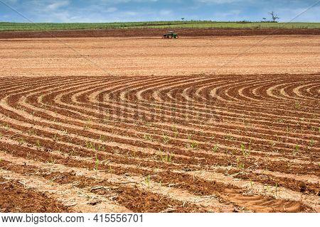 Piracicaba, Sao Paulo, Brazil October 10, 2008. Tractor And Fertilizer Spreader In Sugar Cane Field