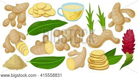 Ginger Isolated Cartoon Set Icon. Vector Illustration Root On White Background. Vector Cartoon Set I