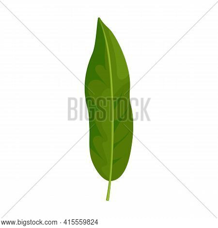 Leaf Lychee Vector Icon.cartoon Vector Icon Isolated On White Background Leaf Lychee.