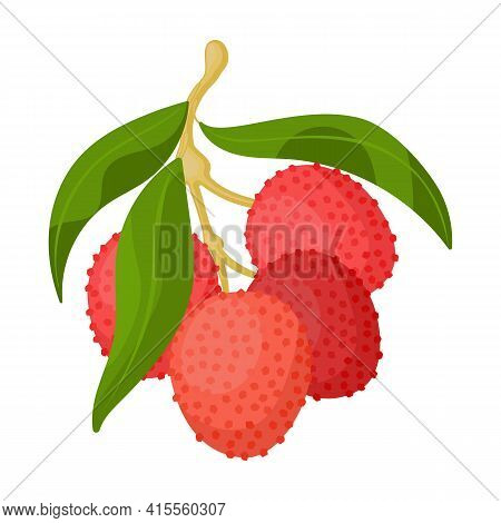 Lychee Vector Icon.cartoon Vector Icon Isolated On White Background Lychee.