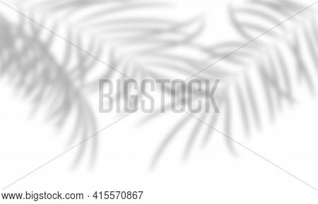 Shadow Of The Palm Leaves On A White Wall. Transparent Overlay Shadow Effect From Tropical Plant Lea