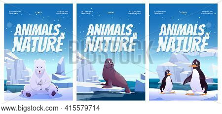 Animals In Nature Posters With Penguin, Polar Bear And Seal On Floe. Vector Flyers Of Zoo Or Natural