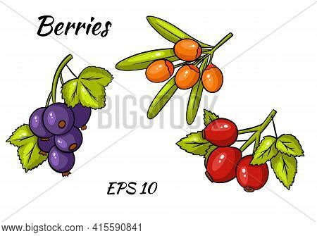 Set Of Colorful Berries. Twigs Of Red Currant, Stinging, Rose Hips.