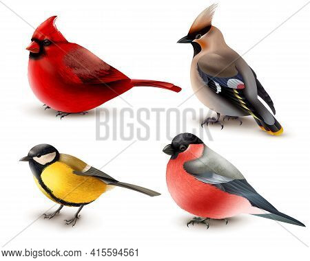 Set Of Winter Birds With Red Cardinal, Titmouse, Waxwing And Bullfinch, 3d Design Isolated Vector Il