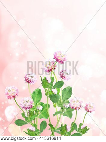 Wild red clover (Trifolium pratense) on sunny beautiful nature spring background. Summer scene with clover flower of pink color. Vertical spring banner with flowers. Copy space for text