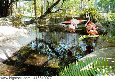 Group Of Pink Long Legs Flamingo Birds In A Pond Of The Zoo Inside Baluster,big Bird Is Relaxing Enj