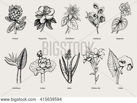 Hand Drawn Exotic Plants Set With Natural Tropical Flowers In Vintage Style Isolated Vector Illustra