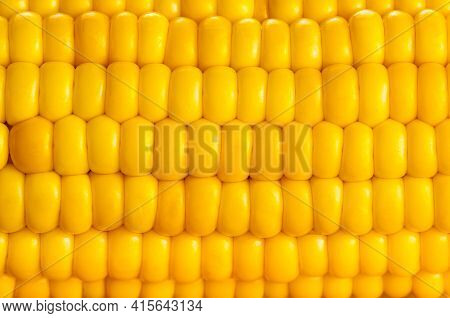 Yellow Collection. Side View Closeup Of Sweet Corn, Show Rows Of Corn Seeds Of Yellow Sweetcorn In S