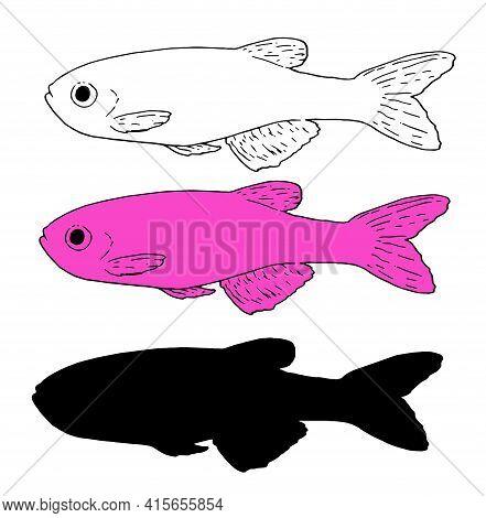 Beautiful Aquarium Fish Silhouette, Great Design For Any Purposes. Scarus Rubroviolaceus Retro Sketc