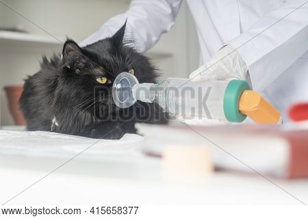 Treating A Cat For Asthma With An Inhaler.