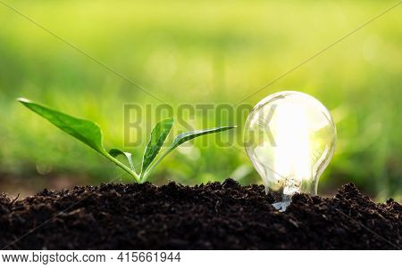 Energy Efficient Led Filament Lightbulb Glowing In Ground With Little Baby Plant Growing Next To It