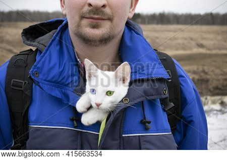 Man In Blue Jacket With White Kitten With Blue And Green Eyes In His Bosom, Close-up.