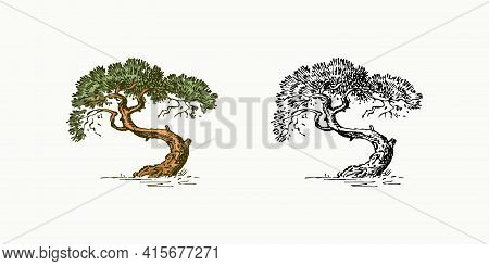 Olive Tree In Vintage Style. The National Symbol Of Greece. Hand Drawn Engraved Sketch In Vintage St
