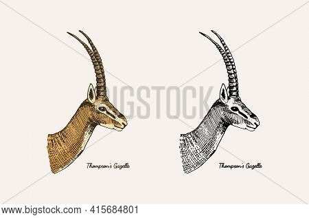 Horn And Antlers Animals. Impala, Gazelle And Greater Kudu, Fallow Deer Reindeer, Axis And Dibatag.