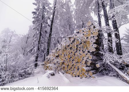 Felled Trunks Of Spruce Trees In Winter With Fog In The Background