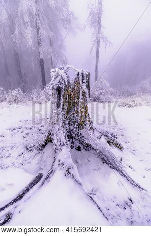 Old Tree Stump Covered With Snow With Snowy Trees In The Background