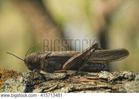 Isolated Locust Insect Living On Tree Trunk Habitat, Wildlife Macro Animal