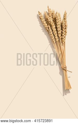 Sheaf Of Wheat Ears Close Up On Set Sail Champagne Color Background. Natural Cereal Plant, Harvest T