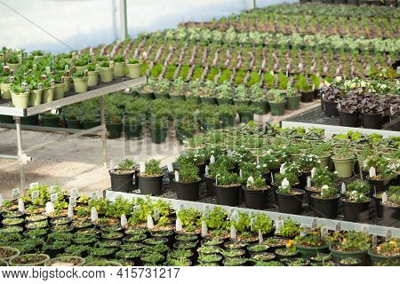 Rows of Plants in a Green House at a Nursery