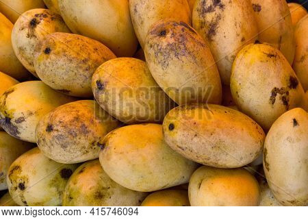 Fresh And Ripe Mango On Display For Sale